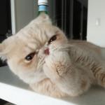 今日、2月22日はネコの日なんだにゃ。