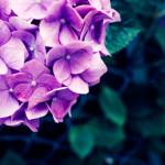 カフカさんから初夏の贈り物①
