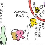 Report.3 タンパク質