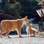 究極の癒やし! ママのキスが嬉しすぎて、しっぽがくるんと巻いちゃう子猫