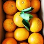 柑橘習慣ふたたび